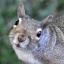 DancesWithSquirrels