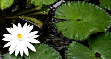 Sanctifying a Dwelling or Getting Rid of Negative Energy Using Garlic, Salt and Water